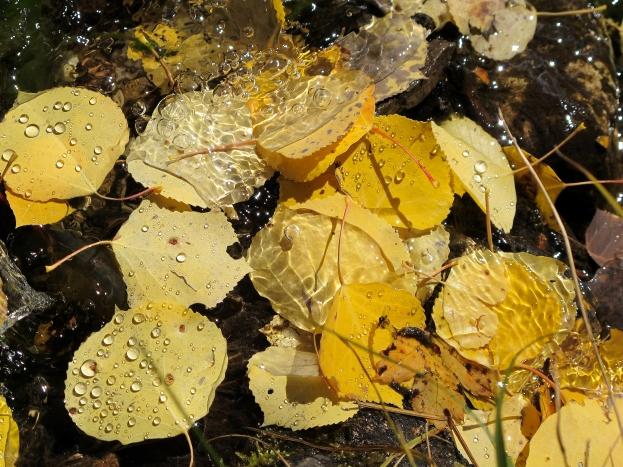 Leaf Peeping Photograph by Julie R. Filatoff