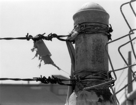 Barbed Wire, Torn Cloth Photograph by Julie R. Filatoff